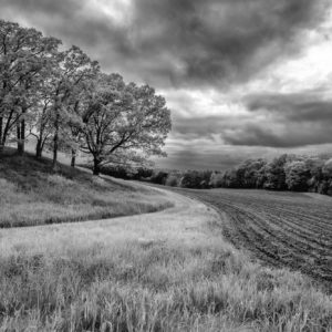 Farm field curving near trees, black and white