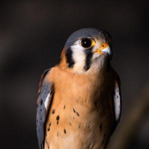small, fierce bird